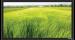 Цены на Экран Vutec ELEGANTE Fixed 183*325 MatteGrey Особенности: Превосходное качество по умеренной цене Рама 4 см в ширину Абсолютно плоское состояние полотна Прочный легкий алюминиевый корпус Черное бархатное покрытие рамы Настенный крепеж в комплекте Полотна: