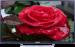 Цены на Shivaki STV - 40LED13 Miracast  -  Нет,   WiDi  -  Нет,   Bluetooth  -  Нет,   Сабвуфер  -  Нет,   3D - очки  -  Нет,   Поддержка DLNA  -  Нет,   NFC  -  Нет,   Встроенный медиа - плеер  -  Есть,   Поддерживаемые форматы файлов  -  WMA,   Управление голосом  -  Нет,   USB - разъем  -  1 шт.,   Количество т